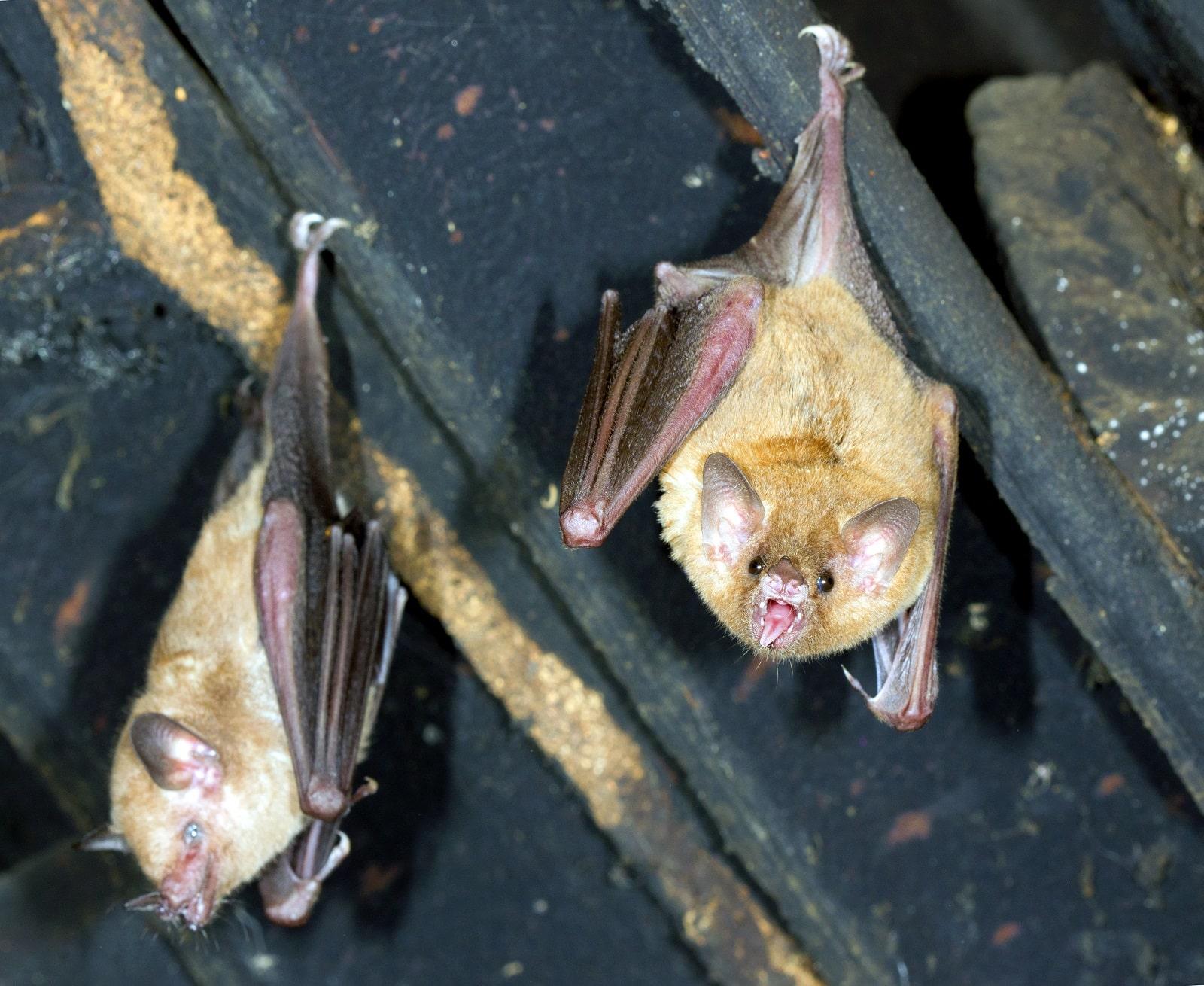Bat Control on blinds door, privacy door, driver door, welcome door,